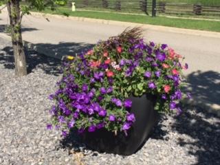 Flowers in Wheatland county